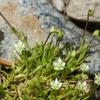 Foto: Úrazník skalní