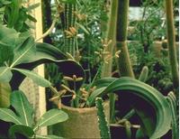 Foto: Welwitschie podivná